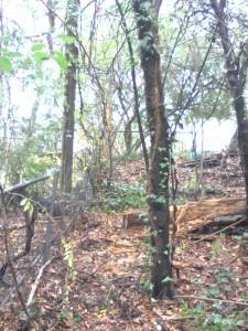 fence repair in woods